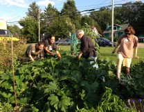 Andy, John, Pat and Glacier harvesting Festival squash