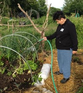Julie watering the hoop house