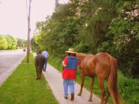 Heading back to the barn.